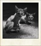 Pasay Kittens