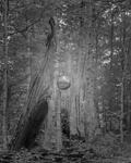 Orb by Matthew Avignone